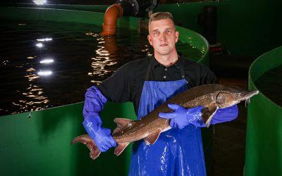 Kalankasvatus tuo työtä syrjäseuduille