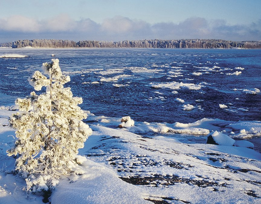 Kanna vastuuta – osta suomalaista kalaa